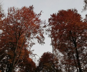 autumn, december, and nature image