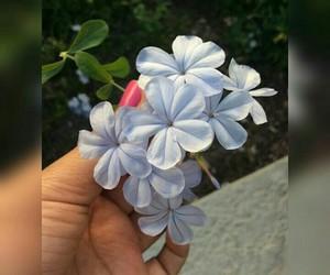 amor, celeste, and flores image
