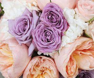 beautiful, roses, and cute image