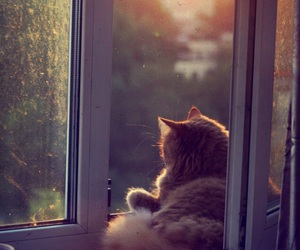 cat, window, and animal image