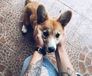 puppy, Tattoos, and buddy image