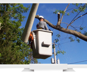 winters tree service, winters tree removal, and davis tree service image