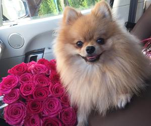 dog and roses image