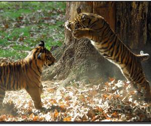 2006, animal, and animals image