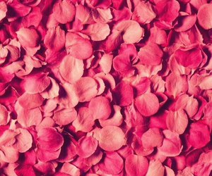 flowers, pink, and petals image