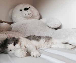 cat, cuddles, and fluffy image