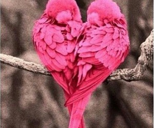 love, bird, and pink image