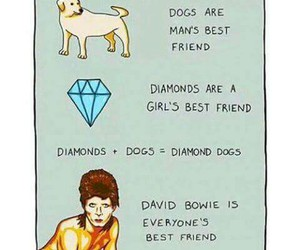 david bowie, diamonds, and dog image