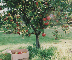 apple, tree, and nature image