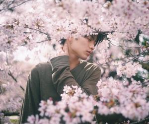 boy, japan, and sakura image