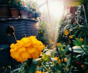 flowers and sunshine image