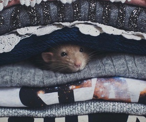 animals, mouse, and cute image