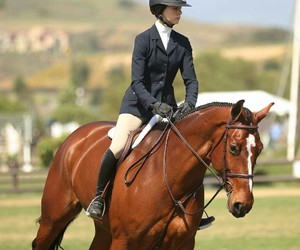 equine, photography, and showjumping image