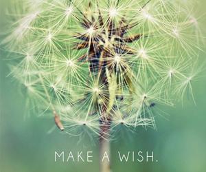wallpaper, wish, and dandelion image