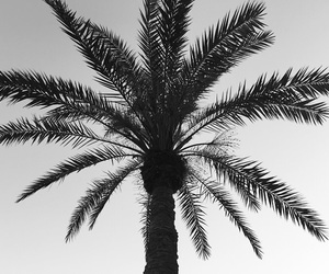 black and white, palm, and palm tree image