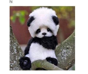 aww, hi, and panda image