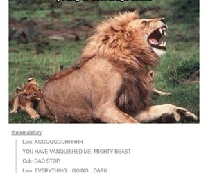 funny, lion, and animal image