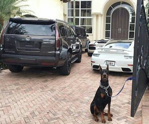 doberman, porsche, and escalade image