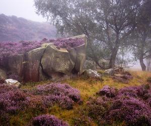 forest, landscape, and mist image