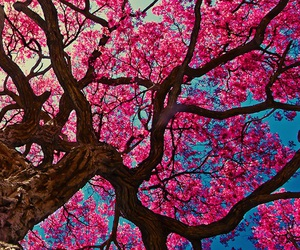 pink, tree, and wallpaper image
