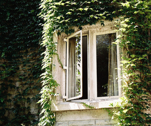 window, green, and vintage image