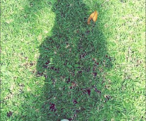 grass, leaves, and shadow image