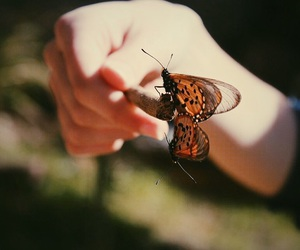 animals, beautiful, and butterfly image
