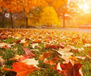 fall leaves sun autumn image