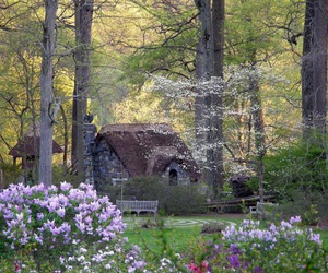 flowers, nature, and cottage image