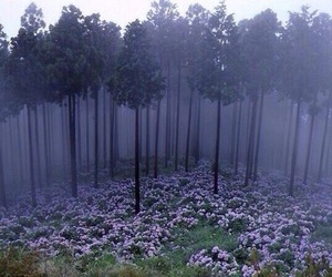 aesthetic, forest, and pretty image