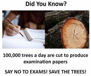 exam, school, and trees image