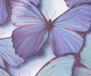 aesthetic, butterfly, and pretty image