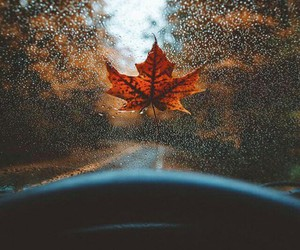 autumn, leaves, and fall vibes image