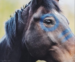 blu, draw, and horse image
