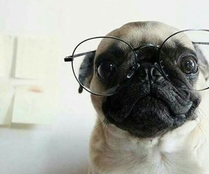 glasses, pug, and love image