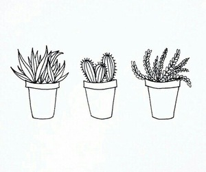 cactus, plants, and draw image