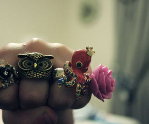 fashion, rings, and owl image