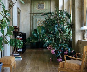 plants, home, and aesthetic image