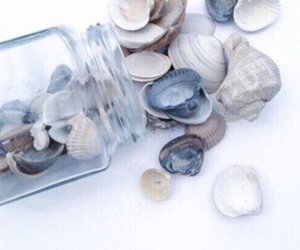 blue, white, and shell image
