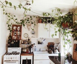 kitchen, plants, and home image