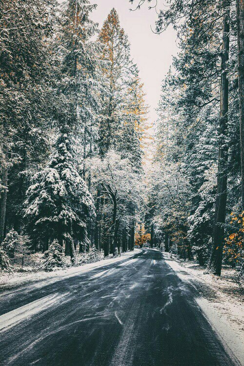 forest, natural, and winter image