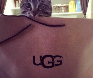 animals, cat, and ugg image
