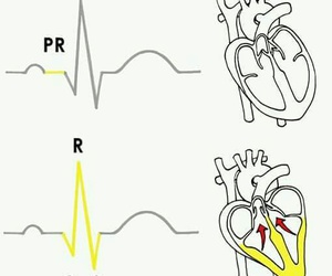 heart, medicine, and nursing image