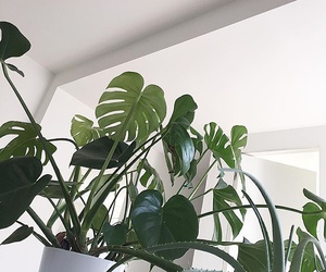 aesthetic and plants image