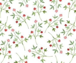background, blossom, and botanic image