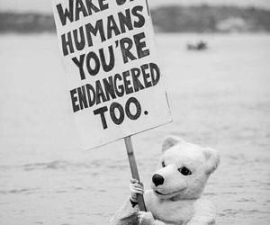 endangered, animals, and Polar Bear image