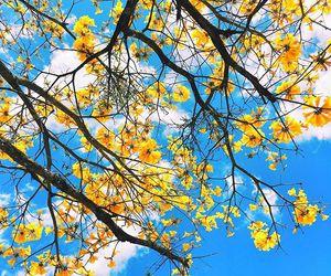 fall, flower, and season image