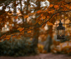 autumn, fall, and lantern image