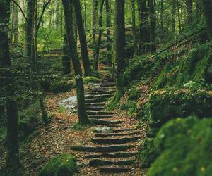 forest, adventure, and green image
