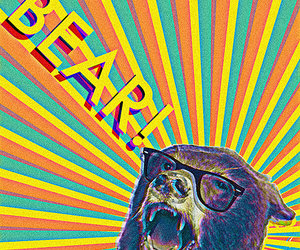 bear and colors image